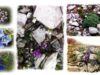 Fiori della Val Binon 10