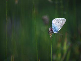 Farfalle della Val Binon 02