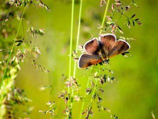 Farfalle della Val Binon 03