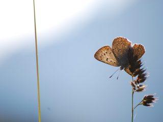 Farfalle della Val Binon 04