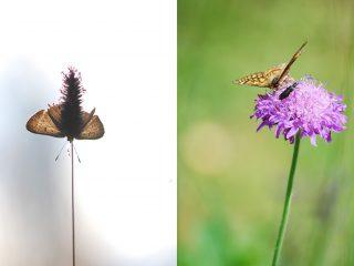 Farfalle della Val Binon 06