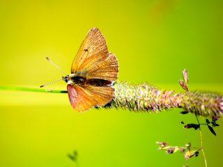 Farfalle della Val Binon 07