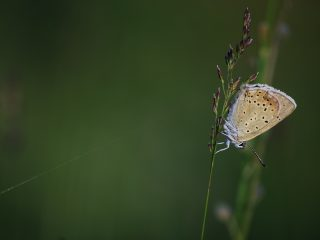 Farfalle della Val Binon 08