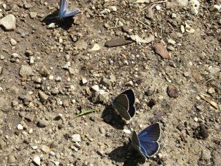 Farfalle della Val Binon 09