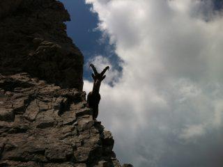 Stambecco dintorni Val Binon 03
